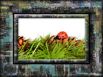 Framed ladybird Royalty Free Stock Image