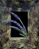 Framed Lavender Royalty Free Stock Photography