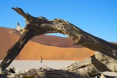 Sossusvlei dunes at Dead Vlei. Framed by old log arch Sossusvlei dunes at Dead Vlei old trees,orange dunes and white salt pan royalty free stock images