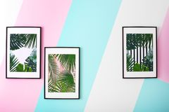 Framed pictures of tropical leaves. On color background Stock Image