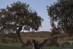 Framed rural landscape of Castro, Verde, in the Alentejo, Portug. Al Royalty Free Stock Photos