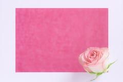 Framed single rose Royalty Free Stock Photos