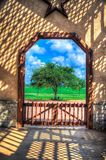 Framed Tree - Fredericksburg Texas. A single tree framed by a rustic door in Central Texas Royalty Free Stock Images