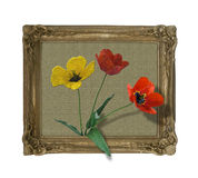 Framed tulips Royalty Free Stock Photo