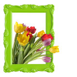 Framed tulips stock images