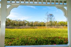 Framed window and the swamp. Framed view of the swamps in summer Royalty Free Stock Image