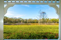 Framed window and the swamp. Framed view of the swamps in summer Royalty Free Stock Photography
