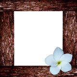 Framen tropicais da flor e da madeira do frangipani Foto de Stock Royalty Free