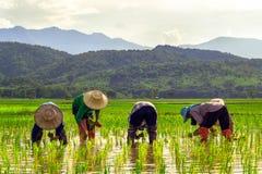 Framer fyra i Thailand Arkivfoton