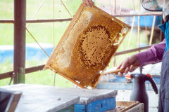 Frames of a bee hive. Beekeeper harvesting honey. The bee smoker is used to calm bees before frame . Beekeeper stock photo