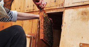 Frames of a bee hive. Beekeeper harvesting honey. Beekeeper Inspecting Bee Hive. Beekeeping stock footage