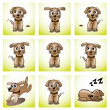 Frames with cute puppy Stock Photography