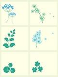 Frames das flores do jardim ajustados. Fotografia de Stock Royalty Free