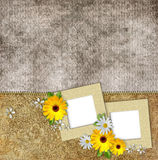 Frames and flowers on vintage background Royalty Free Stock Image