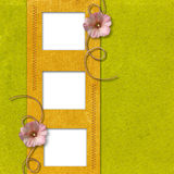 Frames with mallow flowers Royalty Free Stock Images