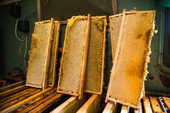 Frames in which is stored Unfinished fresh honey in honeycombs Royalty Free Stock Image