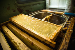 Frames in which is stored Unfinished fresh honey in honeycombs Stock Photo
