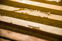 Frames in which is stored Unfinished fresh honey in honeycombs Stock Photos