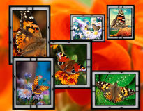 Frames With Flowers And Butterfly Royalty Free Stock Photo