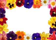 Framework. From bright various flowers stock photography