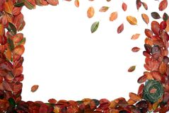 Framework. Natural framework of autumn leaves stock photo
