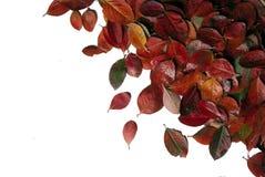 Framework. Natural framework of autumn leaves Stock Photos