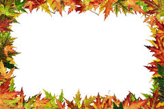 Framework. Autumnal framework with the orange, red, yellow, green leaves royalty free stock photos
