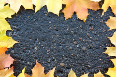 Framework. Autumn leaves on wet asphalt. Stock Photos