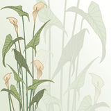 Framework from calla lily Stock Photos