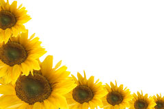 Framework from colours of a sunflower Stock Photography