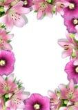 Framework from flowers Stock Photo