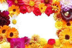 Framework from flowers Stock Images