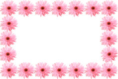 Framework from flowers. Framework from pink flowers gerbera Royalty Free Stock Image