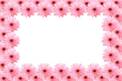 Framework from flowers. Framework from pink flowers gerbera Royalty Free Stock Photos