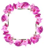Framework from flowers orchids Royalty Free Stock Photography