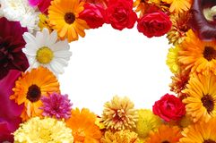 Framework from flowers with petals Royalty Free Stock Photo