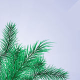Framework From Pine Branches Royalty Free Stock Photography