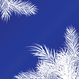 Framework From White Pine Branches Royalty Free Stock Photography