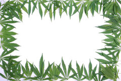 Framework from leaves of a hemp Royalty Free Stock Images