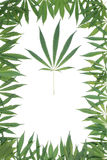 Framework from leaves of a hemp Royalty Free Stock Photography