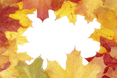 Framework from maple leaves Royalty Free Stock Image
