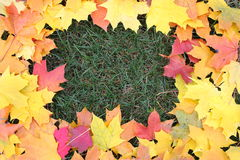 Framework from maple leaves Royalty Free Stock Photos