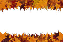 Framework from maple leaves Stock Photography