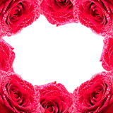 Framework from roses. Framework made from fresh red roses royalty free stock photos