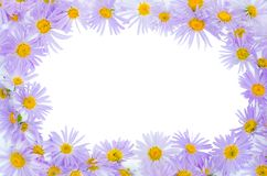 Framework from violet camomiles. A white background royalty free stock image