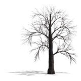framför döda leafs 3d treen Arkivbilder