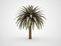 Framförd palmträd Arkivbild