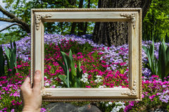 Framing a garden Stock Photo