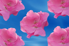 Framing rose flower. In blue sky with five rose Royalty Free Stock Photo