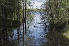 Framkallning för härlig sikt för skogflod royaltyfri bild
